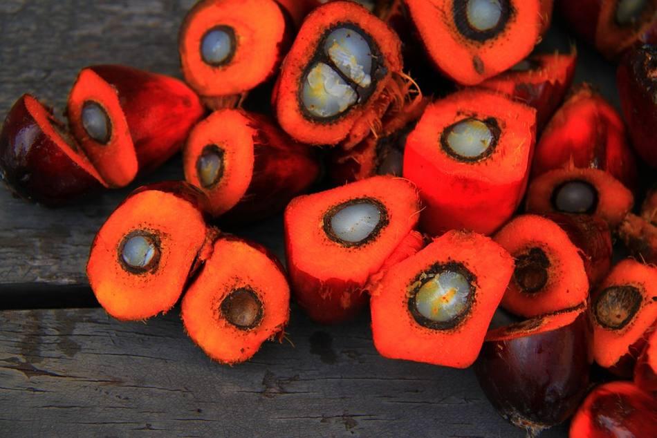 Palmöl – ein Pflanzenfett