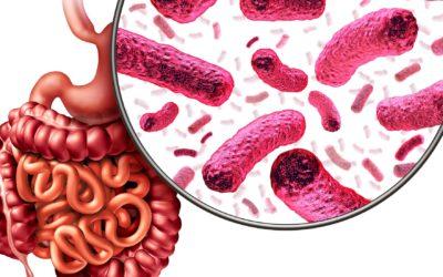 Das Mikrobiom in Quarantäne